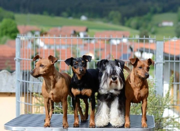 31.03.2013 Internationale Hundeausstellung Ceske Budejovice (CZ)
